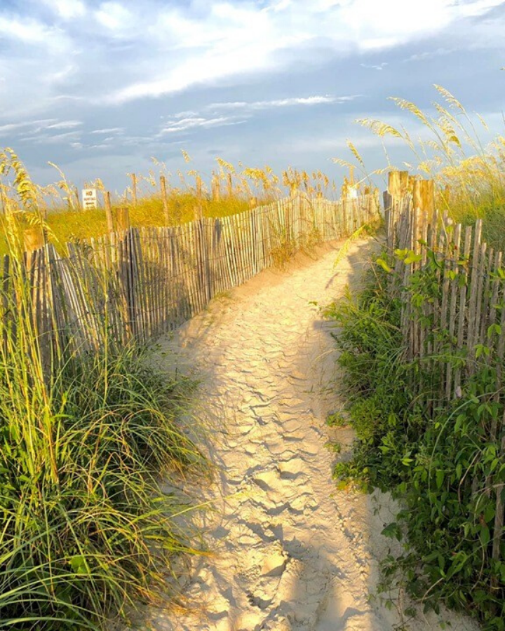 sun lit path of sand with fencing and tall grass leading to the beach